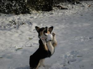 Snowballcatcher